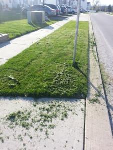lawn_forgiveness